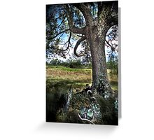 HDR Nature Greeting Card