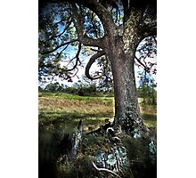 HDR Nature Photographic Print