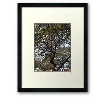 Trees, Branches, Sky — February 17, 2010 Framed Print