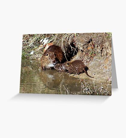 Muskrat Love?? No it's a Nutria Nuzzle Greeting Card