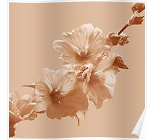 Mallow Flowers Photo to Paint in Sepia Poster