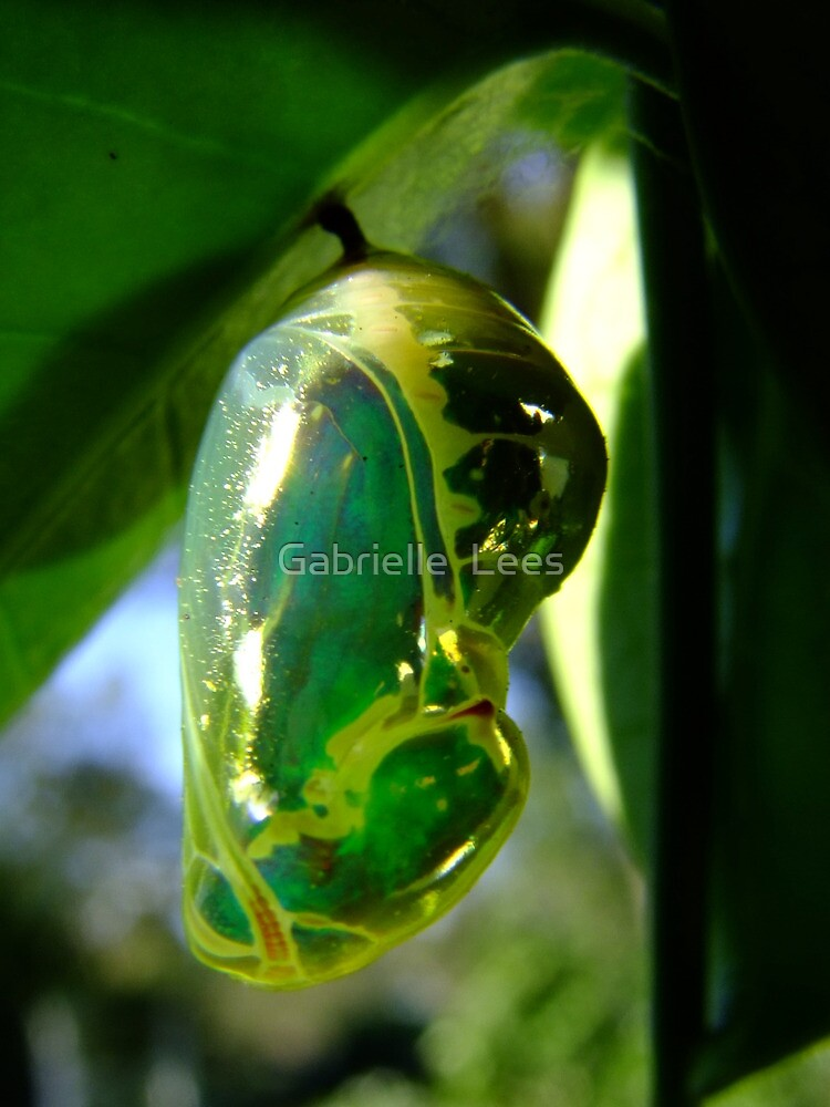 Common Indian Crow Butterfly Chrysalis by Gabrielle  Lees