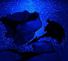 Blue glowing petunas. by Lozzar Flowers & Art