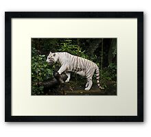 White Tiger Framed Print