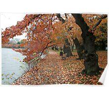 Fall - Washington DC Lake Poster
