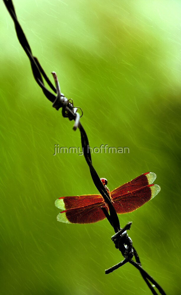During the rain by jimmy hoffman