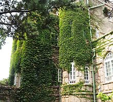 The Granite Castle with vine by nicolaMY