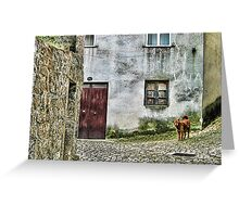A Stray Dog - Guimaraes, Portugal Greeting Card