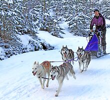 Sled Dog Racing by Mike Paget