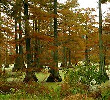 Autumn On Hills Lake  by WildestArt