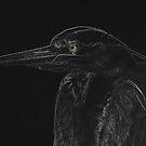Heron by TeresaB