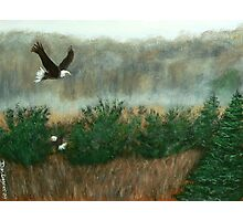 Prarie du sac eagle Photographic Print
