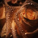 Heart of a Rose by Annabelle Evelyn