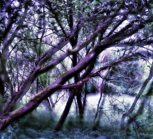 The Mystical Forest  by Mathilda