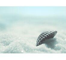 selling sea shells Photographic Print