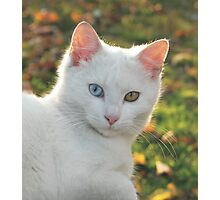 Cat with blue and yellow eyes Photographic Print