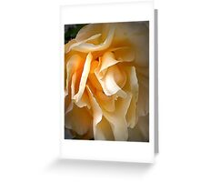 Middle aged rose Greeting Card