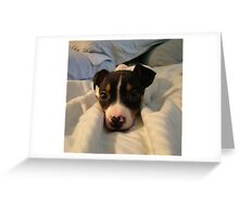 Ringo Pup Greeting Card