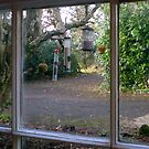 Through The Kitchen Window by oulgundog