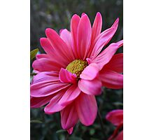 Hot Pink Lover Photographic Print