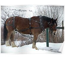Draft Horse Poster