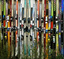 Ski Fence by Virginia Maguire