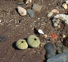Seashore Treasures in Spain by Allen Lucas