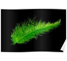Green feather Poster