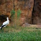 Stork at the Rocks by Merlina Capalini