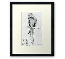 A Playful Parrot Framed Print