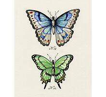Butterflies N.01 & N.02 Photographic Print