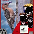 Woodpecker Banner by Pat Moore