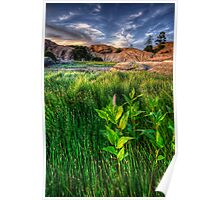 Tall Grass, One Pink Poster