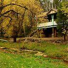 Autumn, Central Springs, Daylesford by Joe Mortelliti