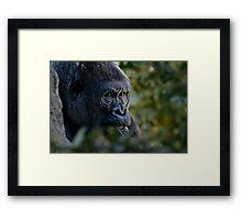 Coy Framed Print