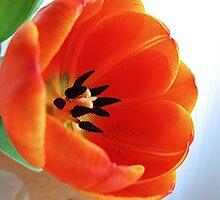 ~ One more tulip ~ by Brenda Boisvert