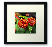 Orange Flowers Framed Print