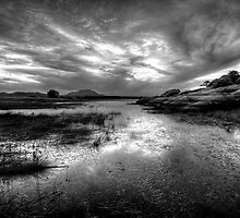 Willow Scenic Black and White by Bob Larson