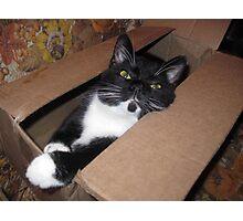 Boxed Oreo Photographic Print