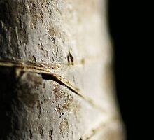 Bark of the Yucca by Adam Jones