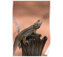 Perched dragon Poster