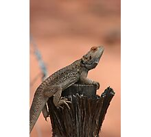 Perched dragon Photographic Print