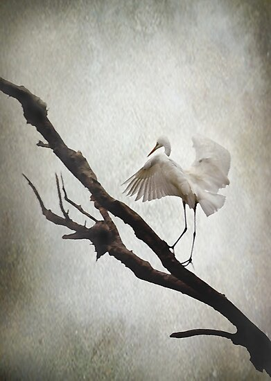 The Tightrope by Trish Woodford