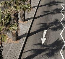 Palm Tree Shadows by awefaul