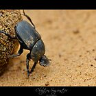 Dung Beatle Macro by Clayton Sageantes