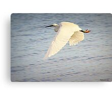 Wing Power Canvas Print