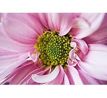 Centre Folds Photographic Print