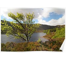 Loch Muick in Spring time Poster