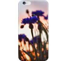 Bachelor Buttons At Sunset iPhone Case/Skin
