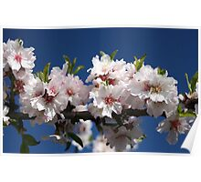 Blossoming almonds Poster